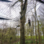 Treetop_manchester_6